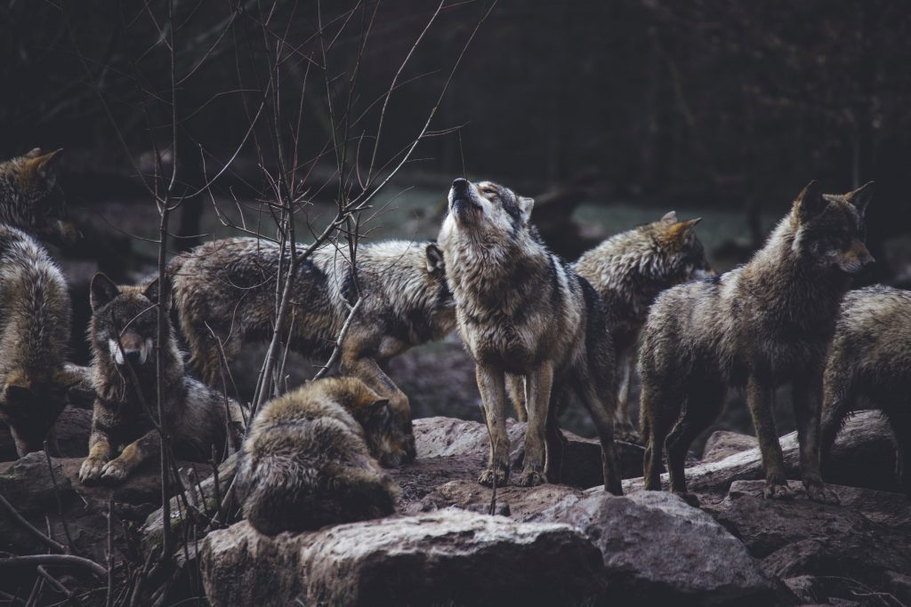 Vlci v rúchu barančom alebo kto je monsignor Halík 1